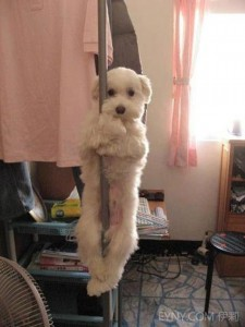 Pole Dancing Tramp Dog